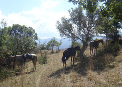 7horses