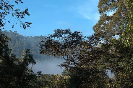 ボルネオの原生林
