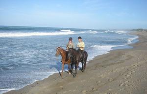 Bali_horse1mini